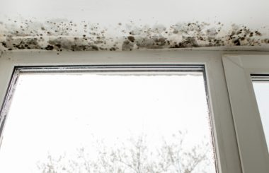 Warning Signs of Toxic Mold